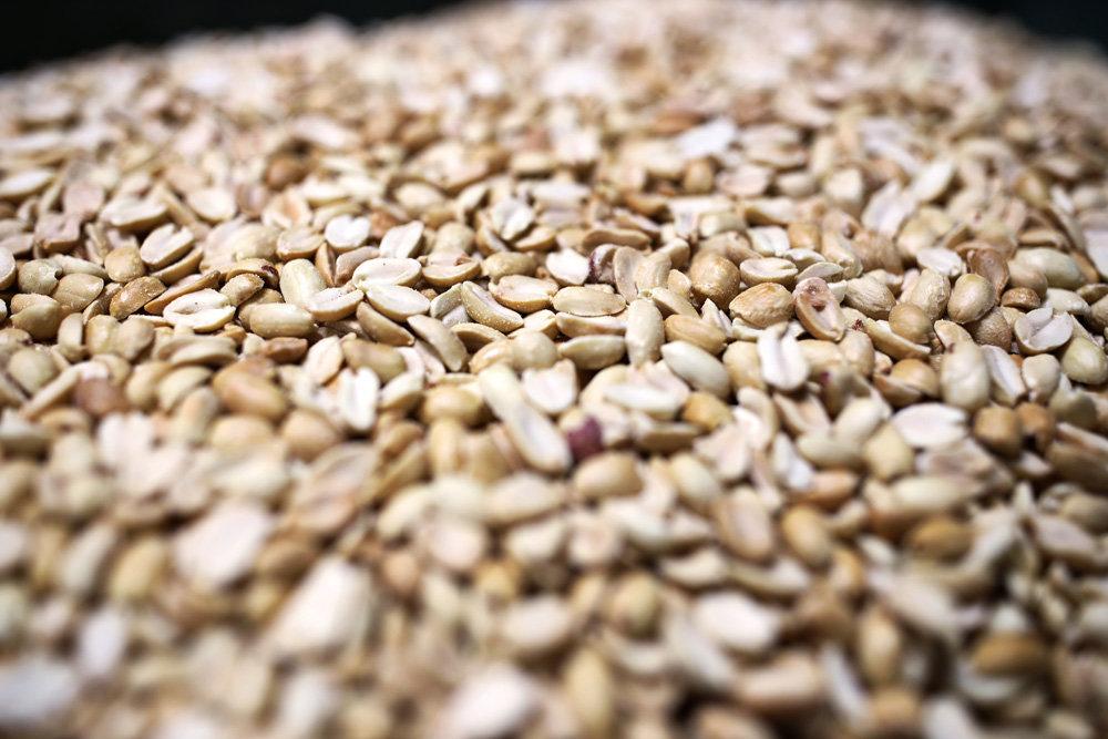 На Кубани вывели новый отечественный сорт арахиса