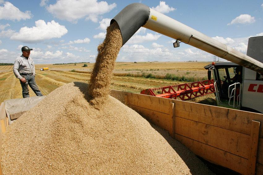 Россия может разделить первенство по экспорту пшеницы с Евросоюзом