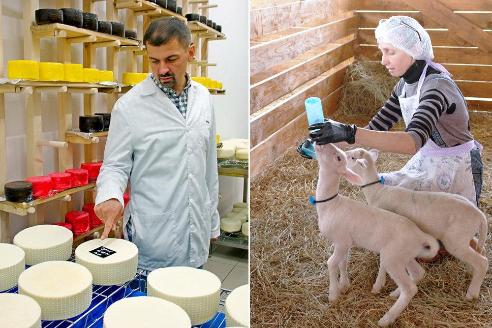 Где в России делают лучший овечий сыр
