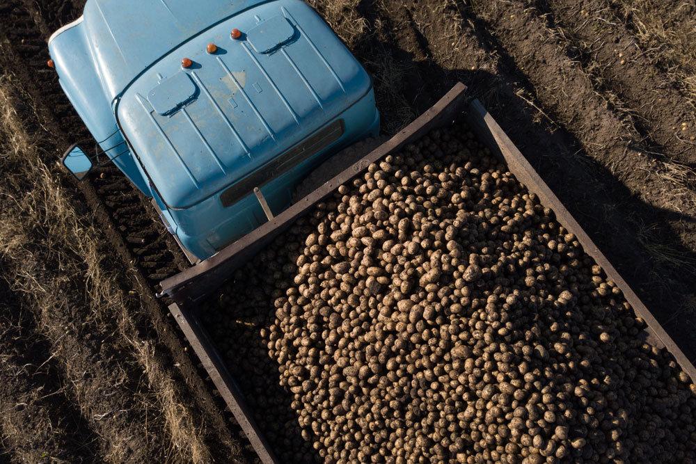Минсельхоз подготовит федеральный проект по производству картофеля и овощей