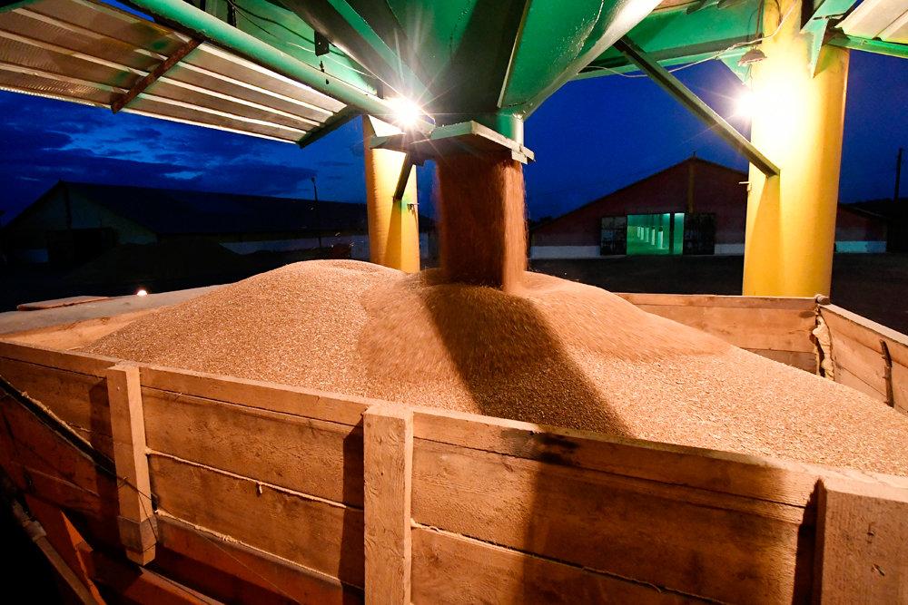 Минсельхоз потратит 17,3 млрд рублей на зерновые и сахарные интервенции