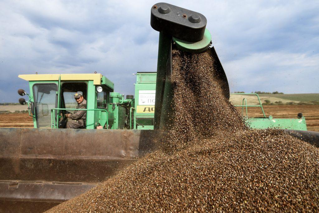 Минсельхоз: Производимых в России круп хватает для удовлетворения спроса